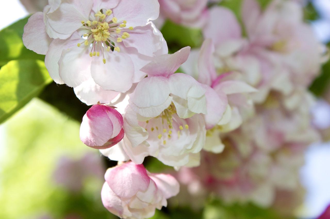 Elixirs Floraux, Remèdes floraux, fleurs de bach, phytothérapie